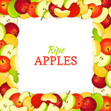 Square colored frame composed of delicious juicy apple fruit. Vector card illustration. Rectangle apples . Ripe fresh Royalty Free Stock Photo