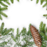 Square composition with fir twigs and cone Stock Images