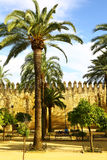 Square in Cordoba with palms & walls, Spain Royalty Free Stock Images