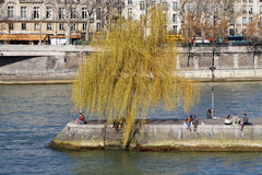 Square du Vert Galant and Seine river. PARIS, FRANCE, March 12, 2015 : The tip of the island Ile de la Cite is the location of the Square du Vert-Galant, a park stock photos