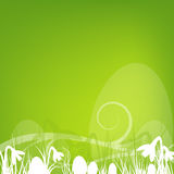 Square easter design Stock Image