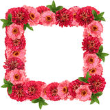 Square floral frame Royalty Free Stock Images
