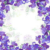 Square frame with contour violet irises and herbs on white. Square frame with contour  violet irises and herbs on white. Floral pattern for your wedding design Royalty Free Stock Images