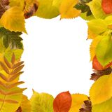 Square frame of different autumn leaves. On white Stock Photos