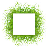 Square frame with grass Royalty Free Stock Photography