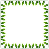 Square frame of a green and succulent leaves peas. Frame of a green and succulent leaves peas  on the perimeter connected  a stem, isolated on white Royalty Free Stock Photo