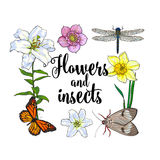 Square frame of insects and flowers with place for text. Square frame of summer insects and flowers with place for text, sketch vector illustration isolated on Royalty Free Stock Image