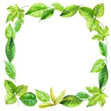 Square frame made of various leaves in watercolor. Hand-painted design elements. Stock Photos