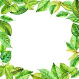 Square frame made of various leaves in watercolor. Hand-painted design elements. Stock Photo