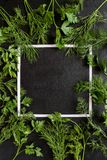 Square frame with parsley and dill stock images