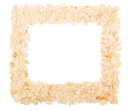 Square frame of pumpkin sunflower seeds isolated on white background Stock Image
