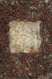 Square frame rusted nails Royalty Free Stock Photos