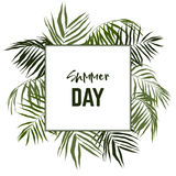 Square frame, surrounded with palm leaves Stock Photography