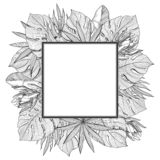 Square frame with tropical, jungle palm leaves royalty free stock image
