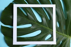 Square frame and tropical leaf on color background. Top view royalty free stock photos