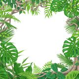 Square Frame with Tropical Plants and Liana. Summer background with green leaves of tropical plants and liana branches. Jungle frame with space for text. Tropic royalty free illustration