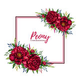 Square frame with watercolor peony Stock Photos