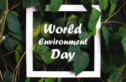 Square frame with world environment day text on green plant leaves background. Card on the theme of nature stock photo