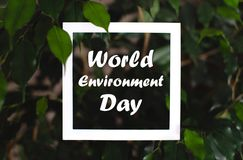 Square frame with world environment day text on green plant leaves background. Card on the theme of nature and flora royalty free stock images