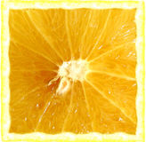 Square grapefruit Royalty Free Stock Images