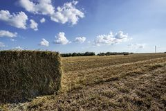 Square grass hay bales Royalty Free Stock Photos