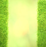 Square of green grass field green Royalty Free Stock Photos