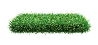 Square of green grass field over white background Royalty Free Stock Photography