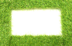 Square of green grass field Royalty Free Stock Photo