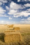 Square hay bales. In a farmers field Stock Photos