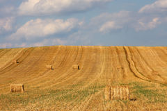 Square hay bales Stock Photography