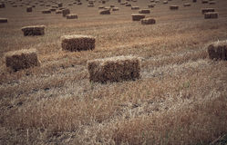Square Hay bales Royalty Free Stock Images
