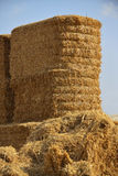 Square hay bales Stock Images