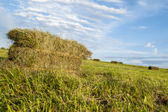 Square haybales of grass hay Royalty Free Stock Photos