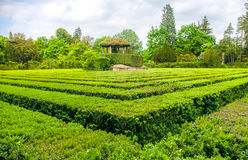 Square hedge  maze garden. Square hedge maze garden game Stock Photo