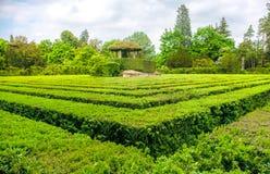Square hedge  maze garden Stock Photo