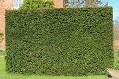 Square hedge. In a summer garden Royalty Free Stock Image