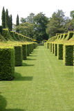 Square Hedges Royalty Free Stock Images