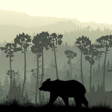 Square illustration of bear on grassy hillside. Stock Image