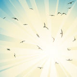 Square illustration flock birds circling in rays of sun. Royalty Free Stock Photos