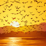Square illustration flock of birds at sunset. Stock Photo