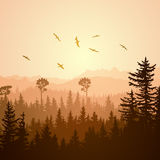 Square illustration of foggy sunset forest hills. Royalty Free Stock Photo