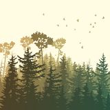 Square illustration of green forest mountains. Square illustration of forest with green coniferous trees sequoia and birds Royalty Free Stock Photo