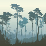 Square illustration of forest with tall pines. Royalty Free Stock Photos
