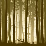 Square illustration of misty coniferous forest from inside. Stock Photo