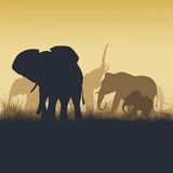 Square illustration of wild animals in sunset savanna. Square vector illustration family of elephants in African sunset savanna Royalty Free Stock Photo
