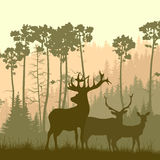 Square illustration of wild elk on edge of forest. Stock Photo