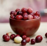 Square image of a bowl of ripe cranberries royalty free stock photo