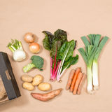 Square Image of a Small Collection of Fresh Vegetables royalty free stock image