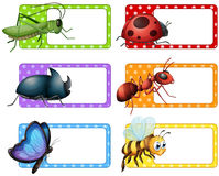 Square labels and many insects Stock Photo