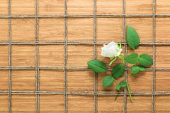 Square lined rope pattern on a wooden background and white rose with leaves interwoven between it. Texture for nature themes. Royalty Free Stock Photos